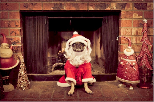 Funny Christmas Pets Ecards For Facebook