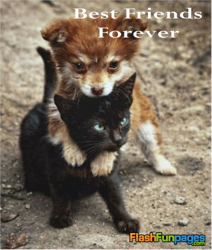 cute animals cute ecards cute pets friendship ecards posted in cute ...