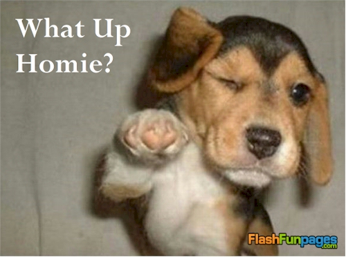 funny puppies pictures - photo #16