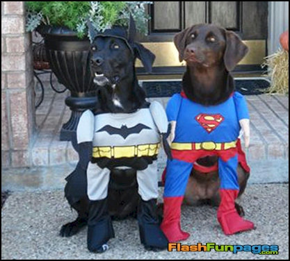 Funny Small Dog Halloween Costumes Funny Dog Costumes