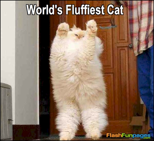 tags cute cats funny a...