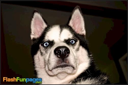 funniest dog face