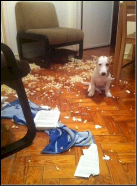 dog who tore things up